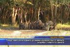 Представители на ловните дружинки настояват лова на дива свиня да бъде открит