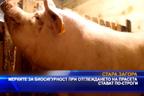 Мерките за биосигурност при отглеждането на прасета стават по-строги