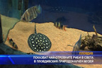 Показват най-отровните риби в света в Пловдивския природонаучен музей
