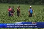 Земеделските производители във Варненско наемат работници от Украйна, за да приберат реколтата