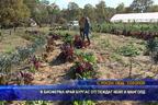 В биоферма край Бургас отглеждат кейл и манголд