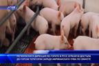В Русе ограничиха достъпа до горски територии заради африканската чума по свинете