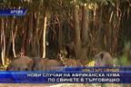 Нови случаи на африканска чума по свинете в Търговищко