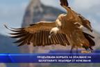 Продължава борбата за опазване на белоглавите лешояди от изчезване