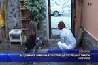 Бездомните животни в Созопол ще посрещнат зимата на топло