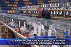 140 български и чужди породи птици показват в изложба в Шумен