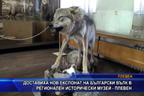 Доставиха нов експонат на български вълк в РИМ