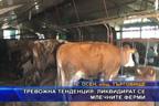 Тревожна тенденция: Ликвидират се млечните ферми