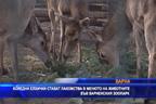 Коледни елхички стават лакомства в менюто на животните от варненския Зоопарк