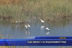 Къде зимуват у нас водолюбивите птици