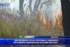 Над 3400 декара гори в Североизточна България са изгорели през 2019 г.