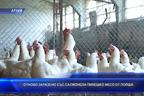 Отново заразено със салмонела пилешко месо от Полша