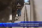 Насилие над малко куче в София разгневи социалната мрежа