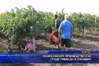 Лозари и винари: Производството на грозде трябва да се субсидира