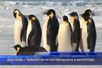 Драстично е намалял броят на пингвините в Антарктида