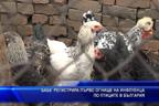 БАБХ регистрира първо огнище на инфлуенца по птиците в България