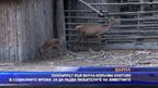 Зоопаркът във Варна излъчва в социалните мрежи, за да радва малучганите