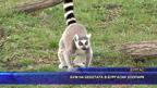 Бум на бебетата в бургаския зоопарк