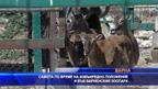 Самота по време на извънредно положение и във арненския зоопарк
