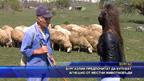 Бургазлии предпочитат да купуват агнешко от местни животновъди