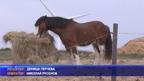 Подновяват се заниманията с терапевтични коне в базата край Варна